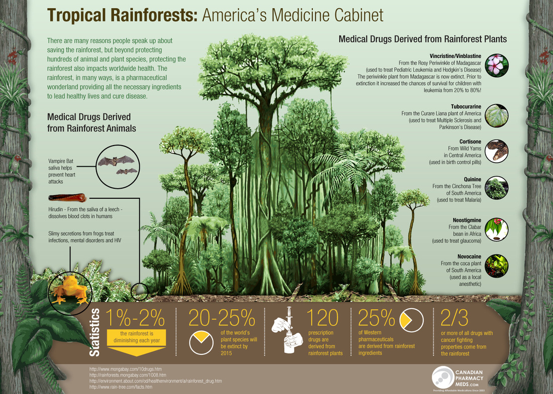 a description of how important it is to preserve and save tropical rain forests Tropical rainforest tropical rainforests receive between 80-400 inches in rainfall a year while temperate rainforests receive about 100 inches a year we commonly hear about how important it is to help preserve our rainforests considering they are being destroyed at such a rapid rate.